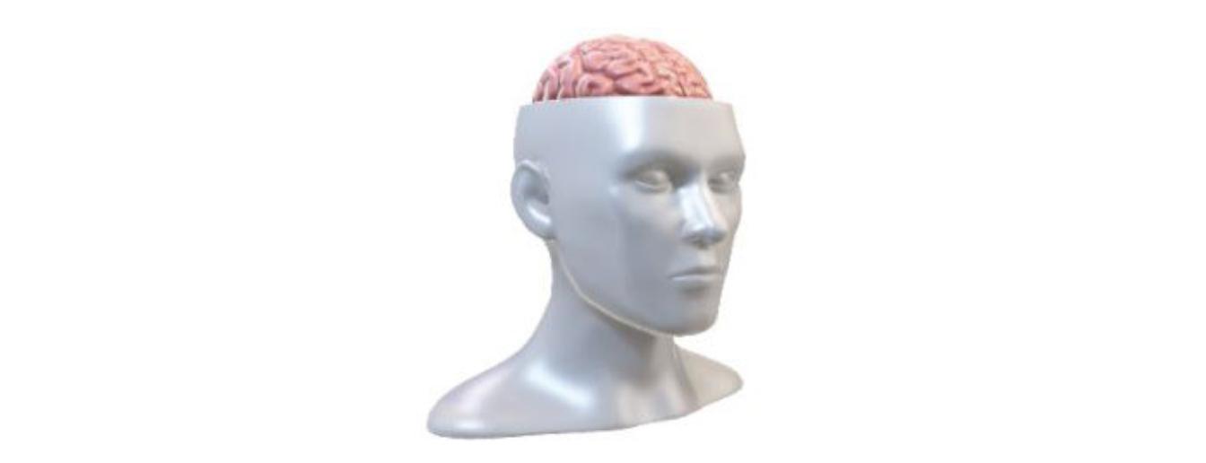 Effetto neurofisiologico